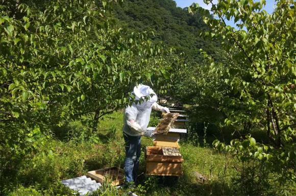 土蜂蜜提取