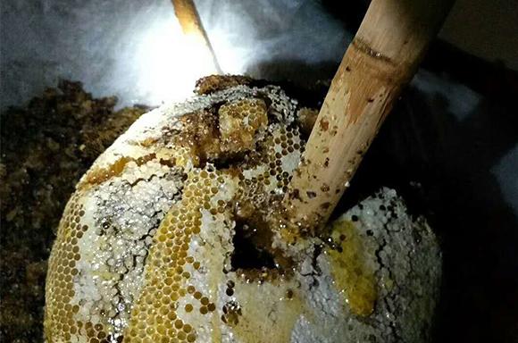 采蜂蜜现场
