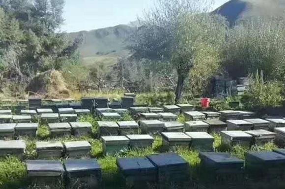土蜂蜜采集地