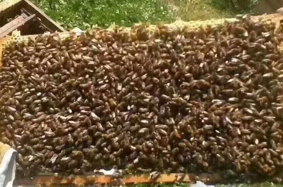 蜂(feng)蜜采集