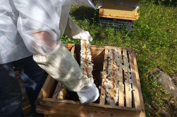 养蜂人取蜂蜜