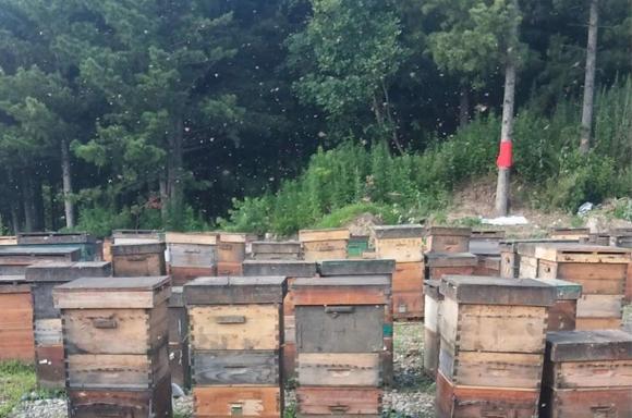 土蜂蜜基地展示