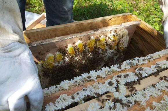 蜂(feng)蜜釀制